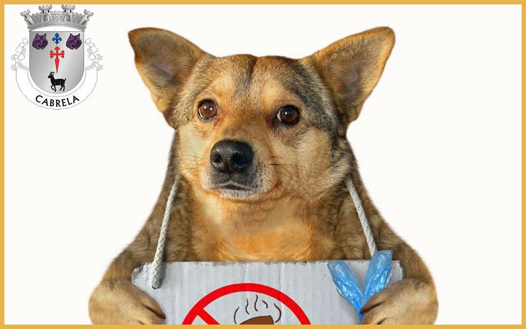 Os dejetos do seu cão não são para ficar no chão!